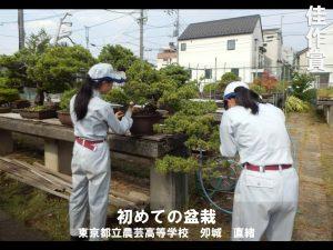 [生徒の部]佳作賞 「初めての盆栽」 東京都立農芸高等学校 夘城 直緒