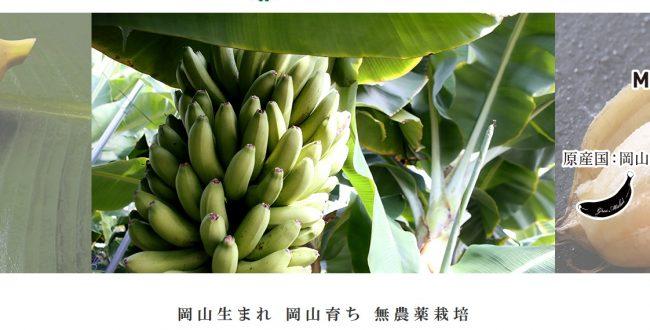 mong_banana